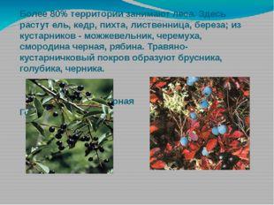 Более 80% территории занимают леса. Здесь растут ель, кедр, пихта, лиственниц