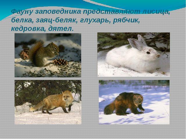 Фауну заповедника представляют лисица, белка, заяц-беляк, глухарь, рябчик, ке...