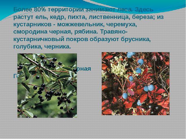 Более 80% территории занимают леса. Здесь растут ель, кедр, пихта, лиственниц...