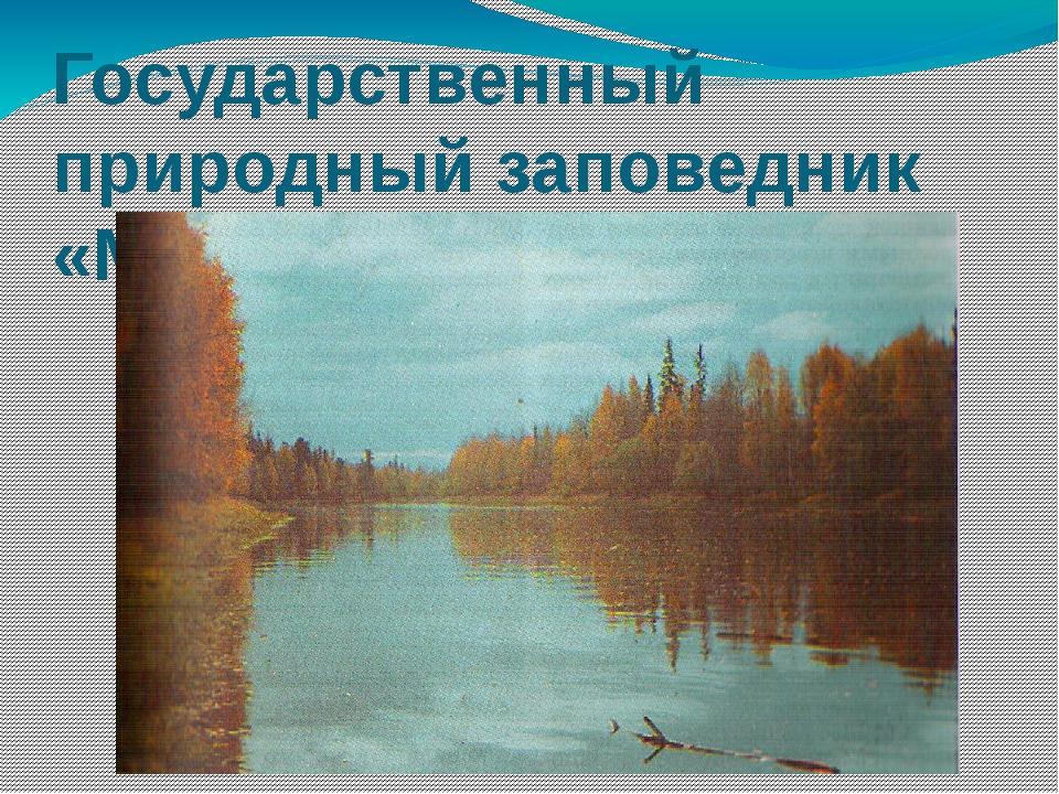 Государственный природный заповедник «Малая Сосьва»