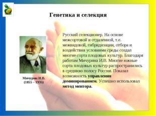 Генетика и селекция Мичурин И.В. (1855 – 1935) Русский селекционер. На основе
