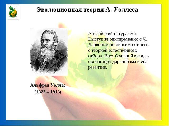 Альфред Уоллес (1823 – 1913) Английский натуралист. Выступил одновременно с...