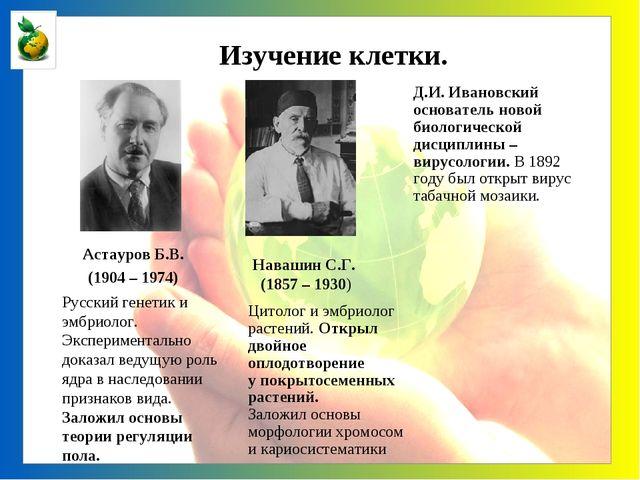 Астауров Б.В. (1904 – 1974) Русский генетик и эмбриолог. Экспериментально до...