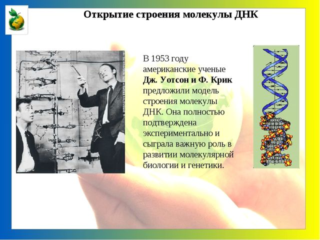 Открытие строения молекулы ДНК В 1953 году американские ученые Дж. Уотсон и...