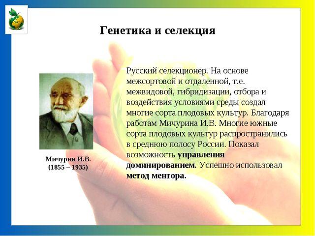 Генетика и селекция Мичурин И.В. (1855 – 1935) Русский селекционер. На основе...
