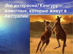 Это интересно! Кенгуру – животные, которые живут в Австралии.