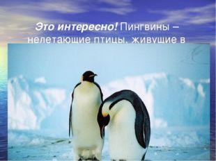 Это интересно! Пингвины – нелетающие птицы, живущие в Антарктиде