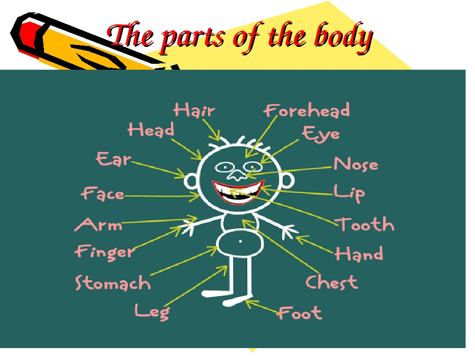 The parts of the body