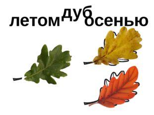 летом осенью дуб