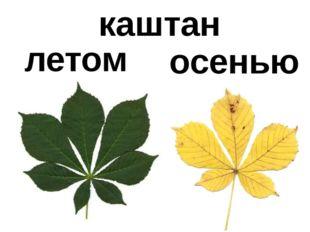 летом осенью каштан