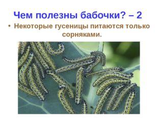 Чем полезны бабочки? – 2 Некоторые гусеницы питаются только сорняками.