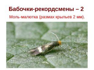 Бабочки-рекордсмены – 2 Моль-малютка (размах крыльев 2 мм).