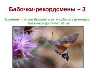 Бабочки-рекордсмены – 3 Бражники – летают быстрее всех. А хоботок у некоторых