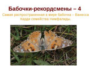 Бабочки-рекордсмены – 4 Самая распространенная в мире бабочка – Ванесса Карди