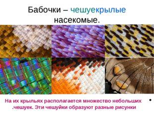 Бабочки – чешуекрылые насекомые. На их крыльях располагается множество неболь