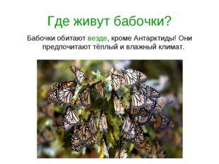 Где живут бабочки? Бабочки обитают везде, кроме Антарктиды! Они предпочитают