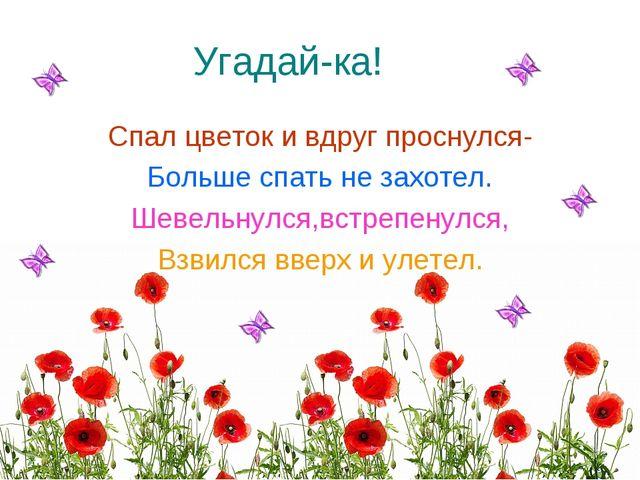 Угадай-ка! Спал цветок и вдруг проснулся- Больше спать не захотел. Шевельнулс...