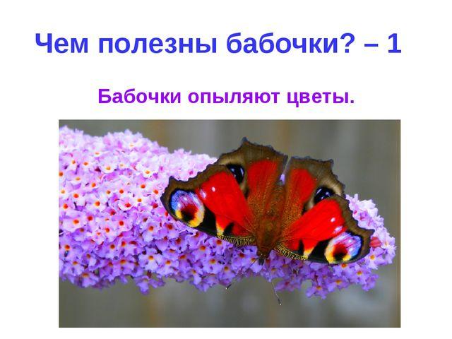 Чем полезны бабочки? – 1 Бабочки опыляют цветы.