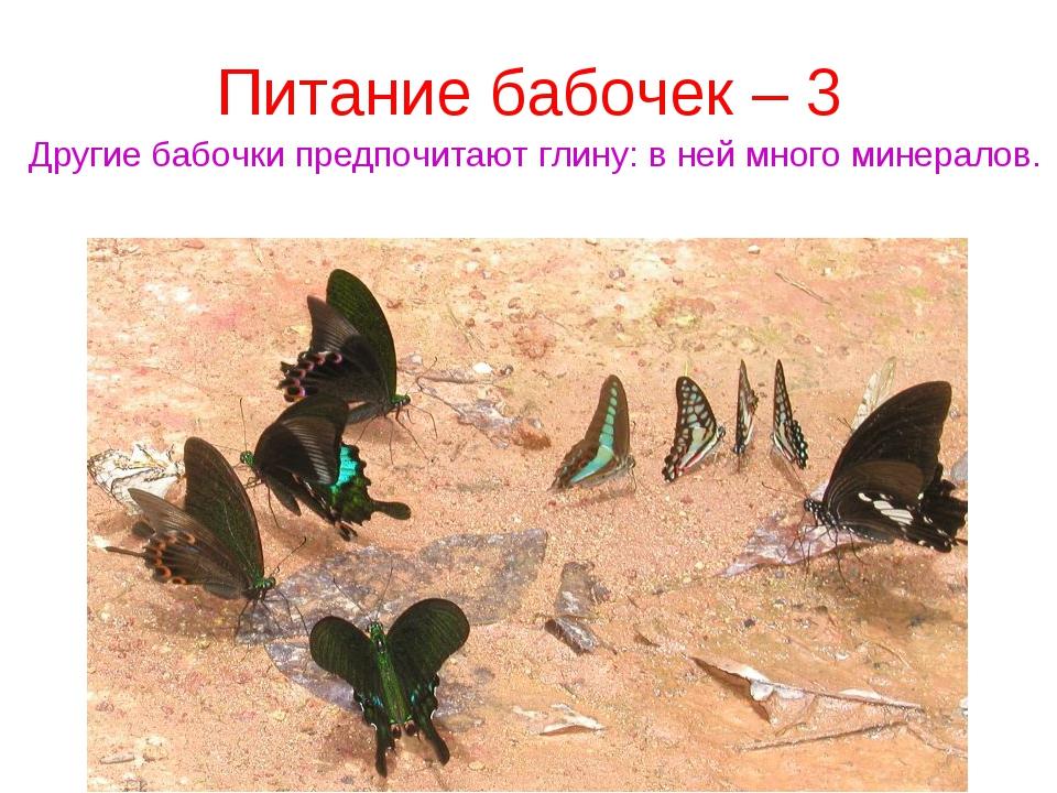 Питание бабочек – 3 Другие бабочки предпочитают глину: в ней много минералов.