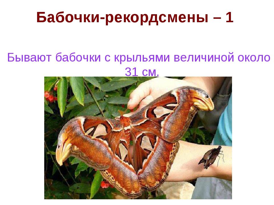 Бабочки-рекордсмены – 1 Бывают бабочки с крыльями величиной около 31 см.