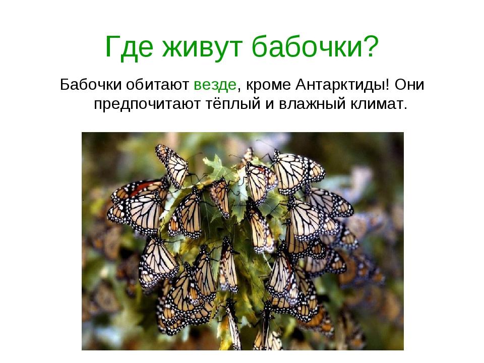 Где живут бабочки? Бабочки обитают везде, кроме Антарктиды! Они предпочитают...