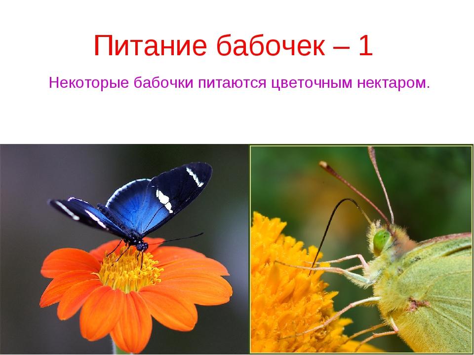 Питание бабочек – 1 Некоторые бабочки питаются цветочным нектаром.