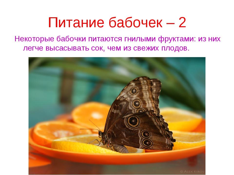 Питание бабочек – 2 Некоторые бабочки питаются гнилыми фруктами: из них легче...