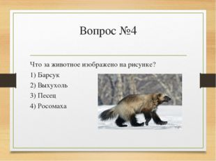 Вопрос №4 Что за животное изображено на рисунке? 1) Барсук 2) Выхухоль 3) Пес