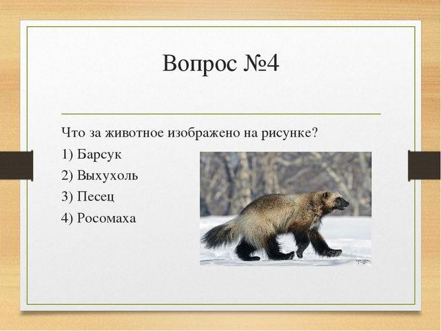 Вопрос №4 Что за животное изображено на рисунке? 1) Барсук 2) Выхухоль 3) Пес...