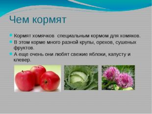 Чем кормят Кормят хомячков специальным кормом для хомяков. В этом корме много