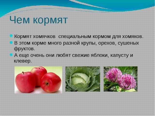 Чем кормят Кормят хомячков специальным кормом для хомяков. В этом корме много...