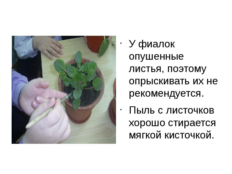 У фиалок опушенные листья, поэтому опрыскивать их не рекомендуется. Пыль с л...