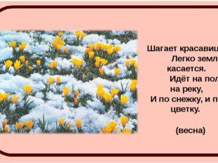 Шагает красавица, Легко земли касается. Идёт на поле, на реку, И по снежку, и