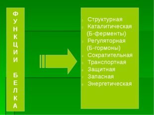 Структурная Каталитическая (Б-ферменты) Регуляторная (Б-гормоны) Сократитель