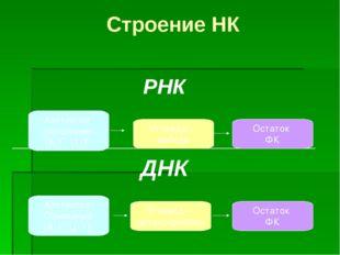 Строение НК РНК ________________________________ ДНК Азотистое основание (А,