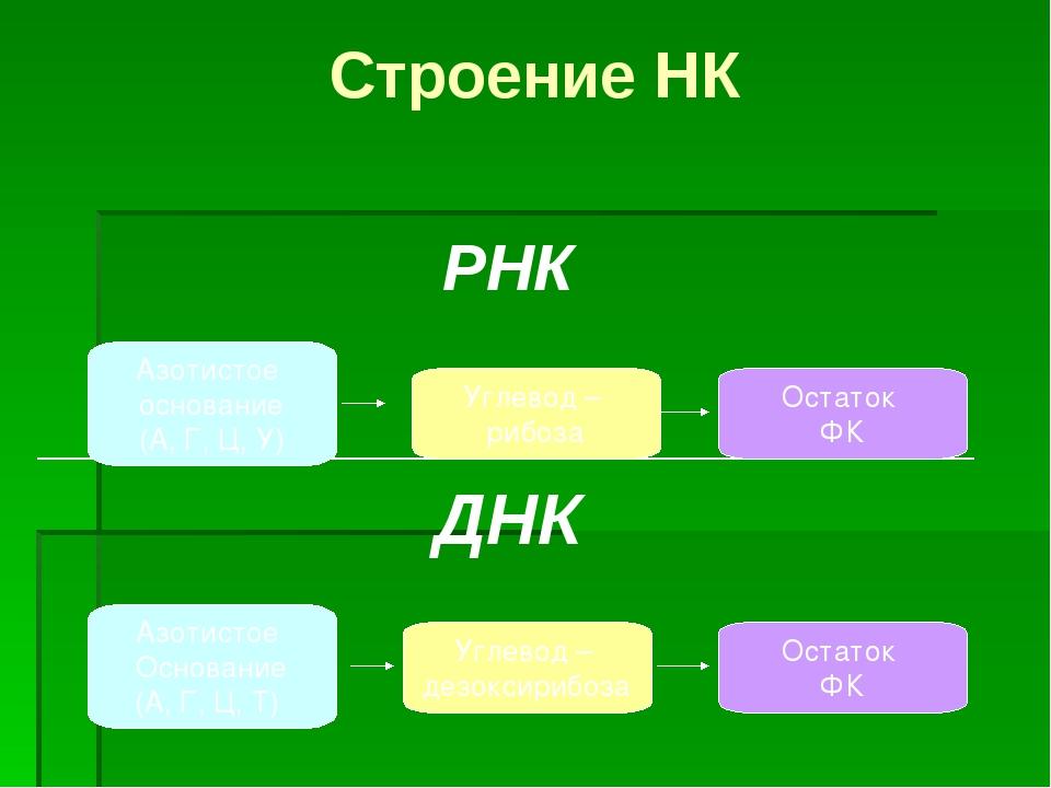 Строение НК РНК ________________________________ ДНК Азотистое основание (А,...