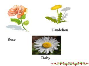 Dandelion Rose 8 Daisy