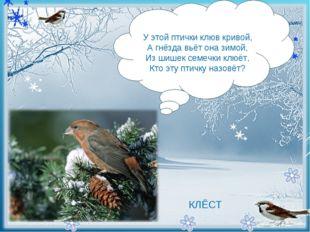 - У этой птички клюв кривой, А гнёзда вьёт она зимой, Из шишек семечки клю