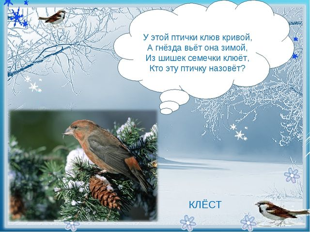 - У этой птички клюв кривой, А гнёзда вьёт она зимой, Из шишек семечки клю...