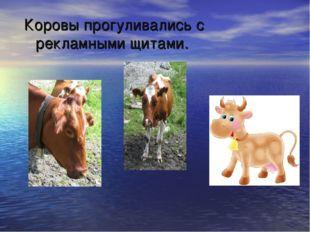 Коровы прогуливались с рекламными щитами.