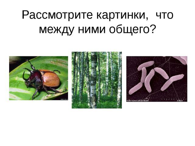Рассмотрите картинки, что между ними общего?