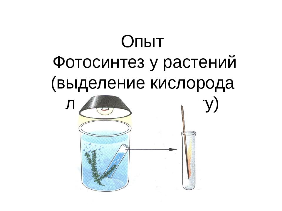 Опыт Фотосинтез у растений (выделение кислорода листьями на свету)