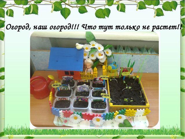 Огород, наш огород!!! Что тут только не растет!!