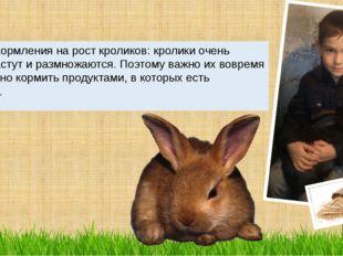 Влияние кормления на рост кроликов: кролики очень быстро растут и размножаютс