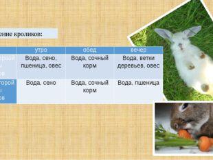 Кормление кроликов:  утро обед вечер Питание первой группы кроликов Вода, се