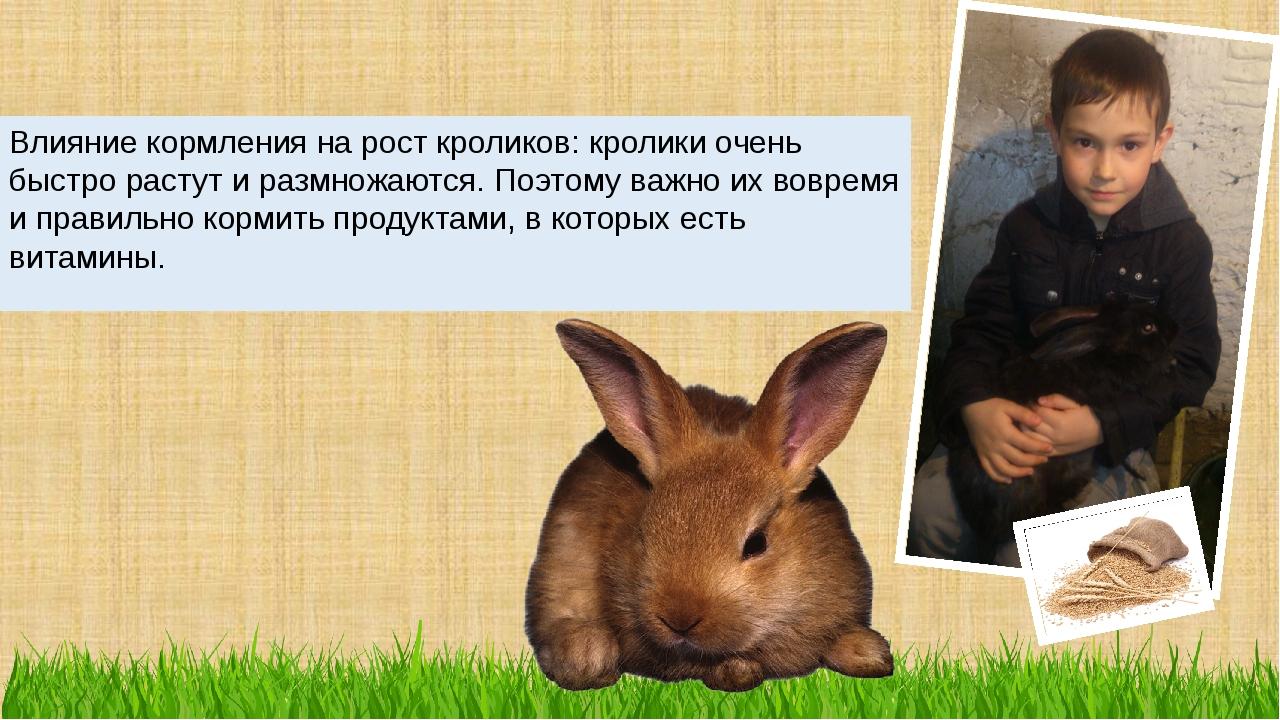 Влияние кормления на рост кроликов: кролики очень быстро растут и размножаютс...