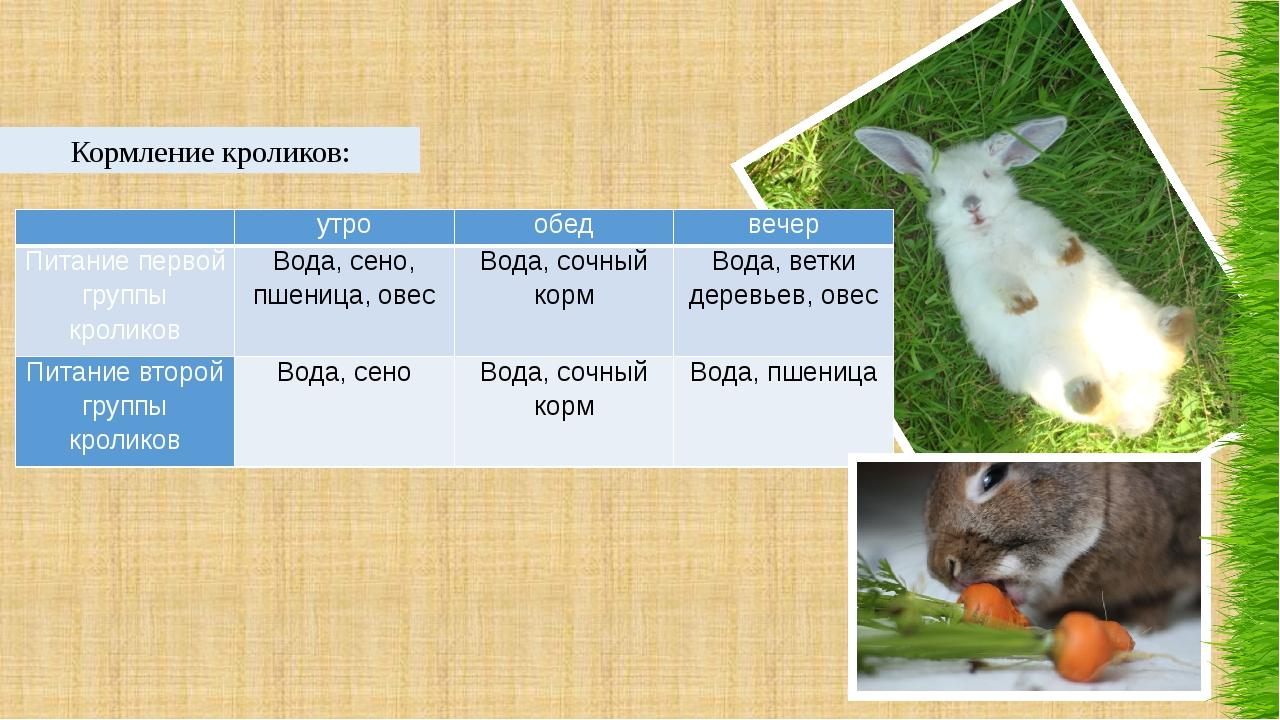 Кормление кроликов:  утро обед вечер Питание первой группы кроликов Вода, се...