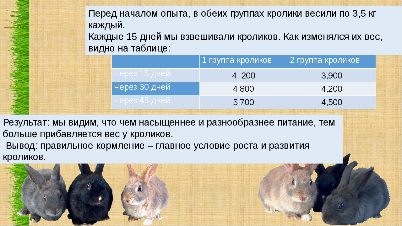 Перед началом опыта, в обеих группах кролики весили по 3,5 кг каждый. Каждые...
