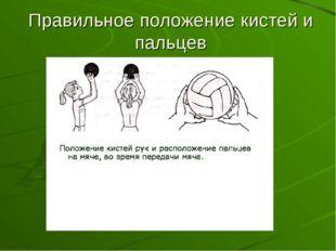 Правильное положение кистей и пальцев