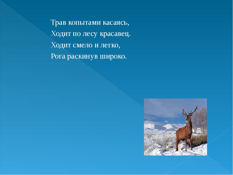 Трав копытами касаясь, Ходит по лесу красавец. Ходит смело и легко, Рога раск...